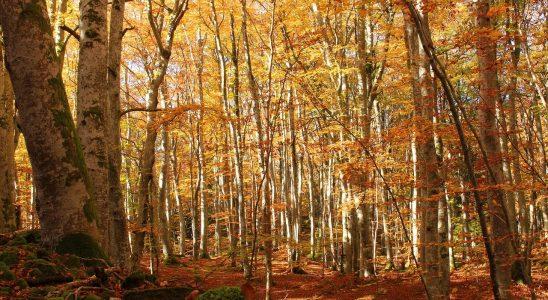 fall-2107814_1280